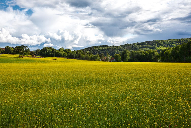 Kyststien går gjennom det praktfulle landskapet i Enningdalen.