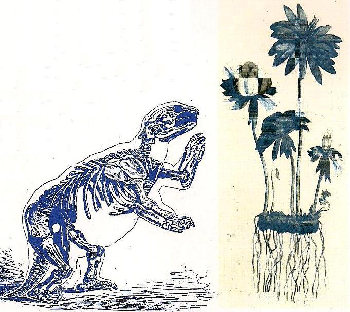 Darwin brochure 2.JPG