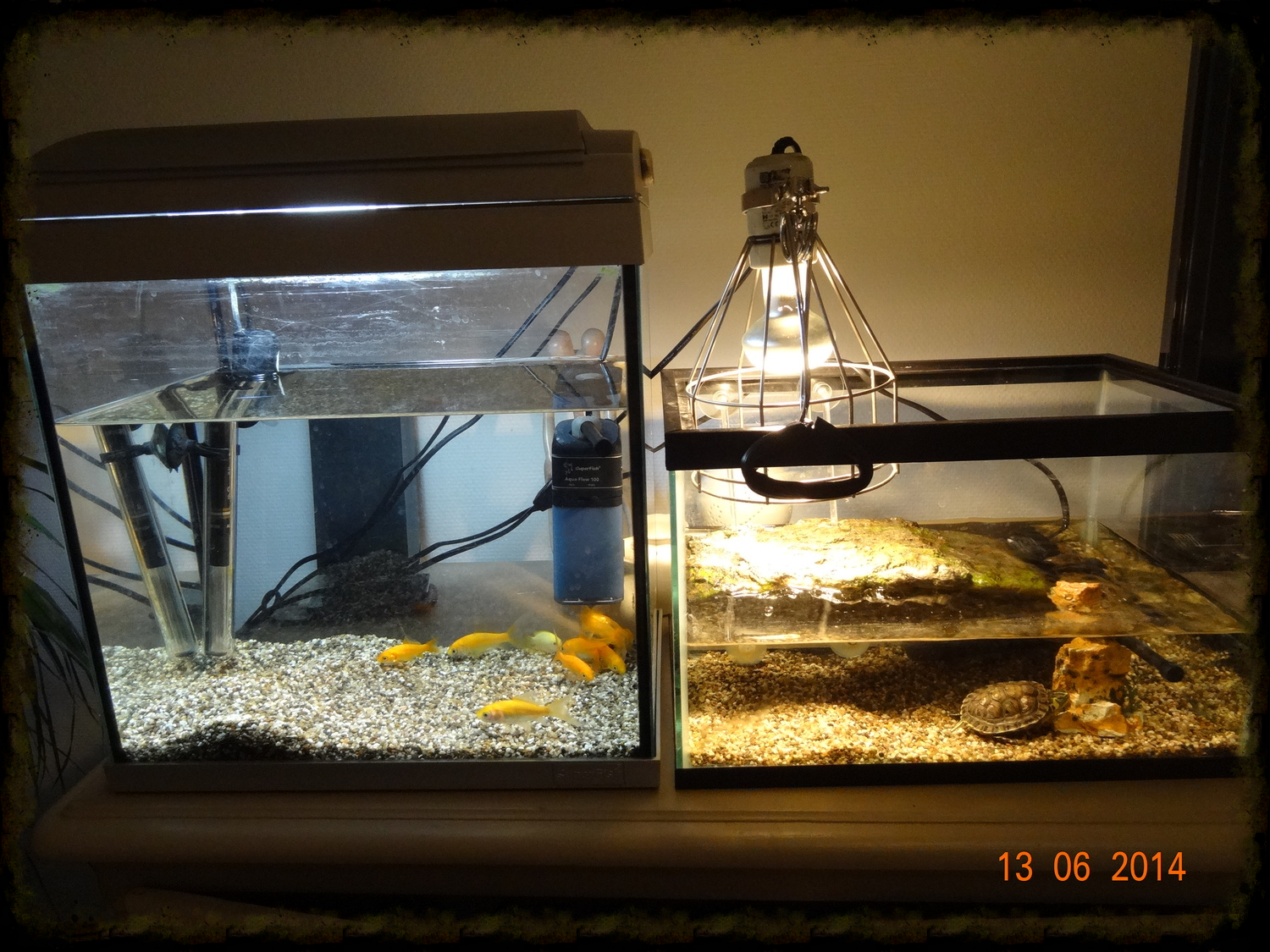 Fish and Turtle, settled into their summer residence.