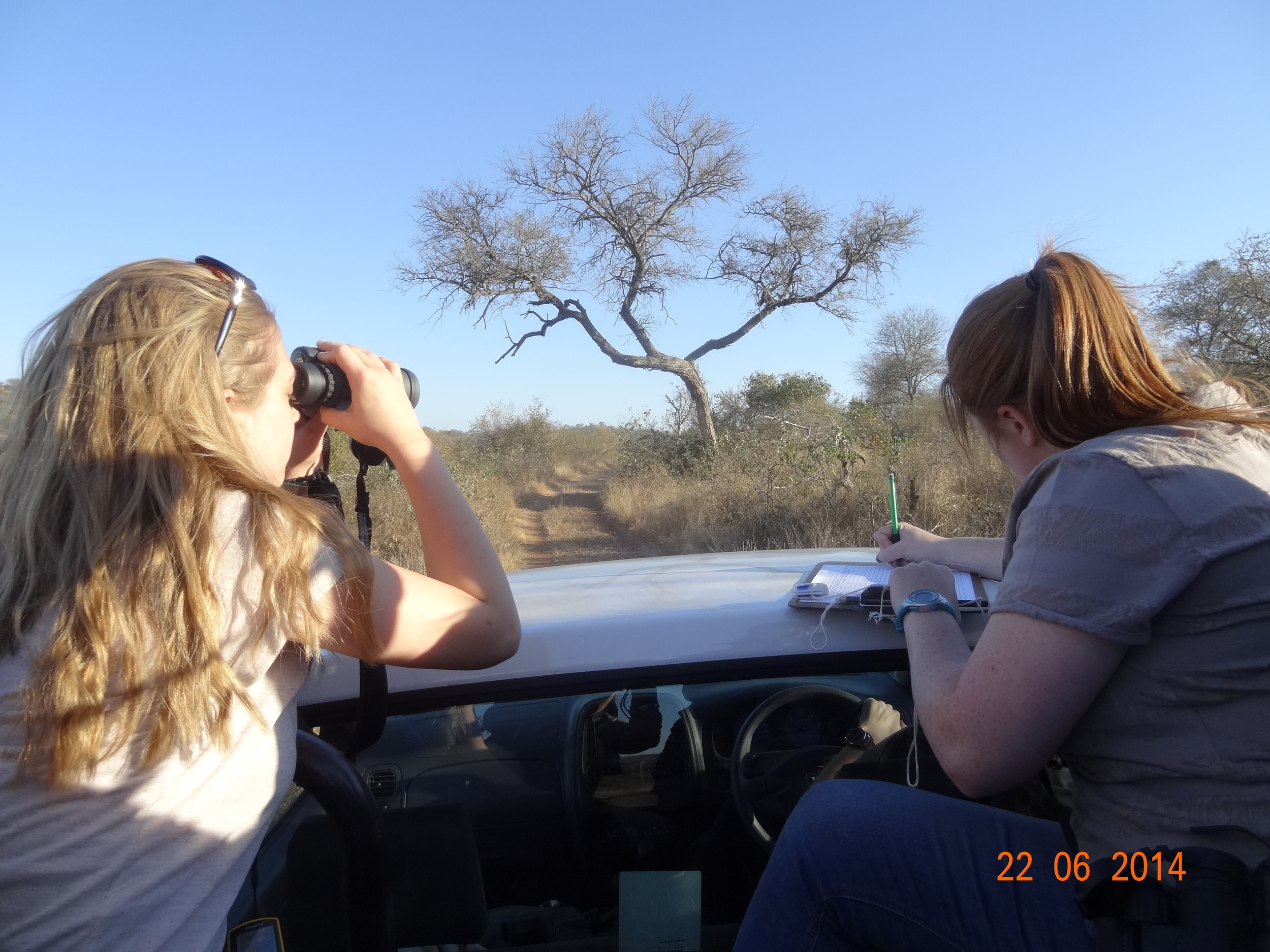 Student identifying and counting species in South Africa