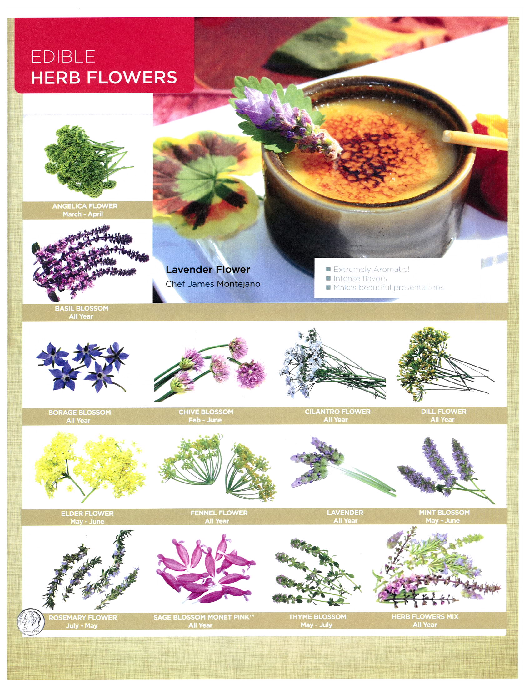 edible flowers page 3