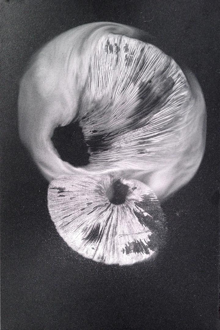 Small White Spore Print on Black Paper