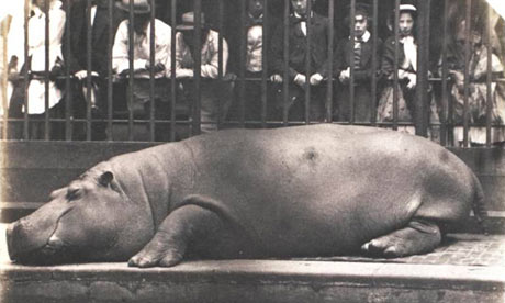Hippopotamus-from-Points--001.jpg