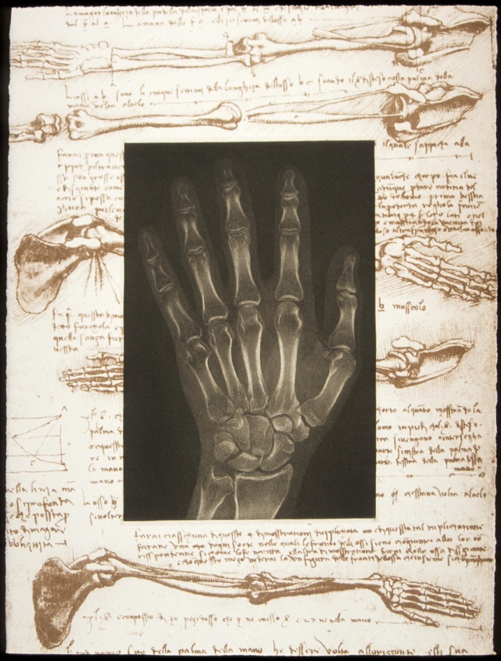 anatomical Study N. 1 .jpg
