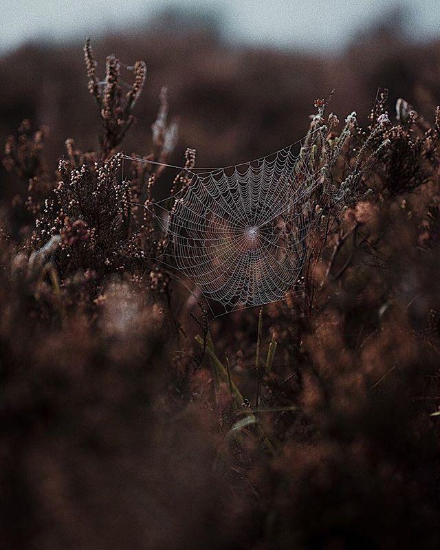 🕸 𝚃𝚑𝚎 𝚊𝚛𝚝𝚒𝚜𝚝 𝚒𝚜 𝚊 𝚛𝚎𝚌𝚎𝚙𝚝𝚊𝚌𝚕𝚎 𝚏𝚘𝚛 𝚎𝚖𝚘𝚝𝚒𝚘𝚗𝚜 𝚝𝚑𝚊𝚝 𝚌𝚘𝚖𝚎 𝚏𝚛𝚘𝚖 𝚊𝚕𝚕 𝚘𝚟𝚎𝚛 𝚝𝚑𝚎 𝚙𝚕𝚊𝚌𝚎: 𝚏𝚛𝚘𝚖 𝚝𝚑𝚎 𝚜𝚔𝚢, 𝚏𝚛𝚘𝚖 𝚝𝚑𝚎 𝚎𝚊𝚛𝚝𝚑, 𝚏𝚛𝚘𝚖 𝚊 𝚜𝚌𝚛𝚊𝚙 𝚘𝚏 𝚙𝚊𝚙𝚎𝚛, 𝚏𝚛𝚘𝚖 𝚊 𝚙𝚊𝚜𝚜𝚒𝚗𝚐 𝚜𝚑𝚊𝚙𝚎, 𝚏𝚛𝚘𝚖 𝚊 𝚜𝚙𝚒𝚍𝚎𝚛'𝚜 𝚠𝚎𝚋. 𝔓𝔞𝔟𝔩𝔬 𝔓𝔦𝔠𝔞𝔰𝔰𝔬 . \\\ 𝐬𝐰𝐢𝐩𝐞 𝐟𝐨𝐫 𝐜𝐥𝐨𝐬𝐞𝐮𝐩𝐬 \\\ . . . #picasso #greatminds #reflection #musings #macro #quotes #inspiration #beinspired #spiderweb #web #spider #lifesdetails #lookaround #nature #beauty #thedetails #thelittlethings #natureshot #getoutside #spidersweb #naturephotography #explorenature #naturemood #happyplace #naturebaby #pablopicasso #whitemothphoto #zoomin #seethebeautyaroundyou #austinphotographer