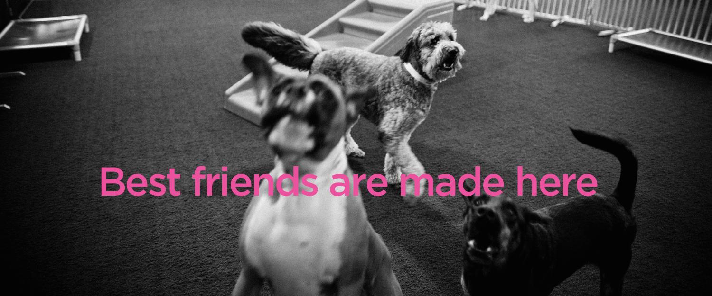 daycare_friends.jpg