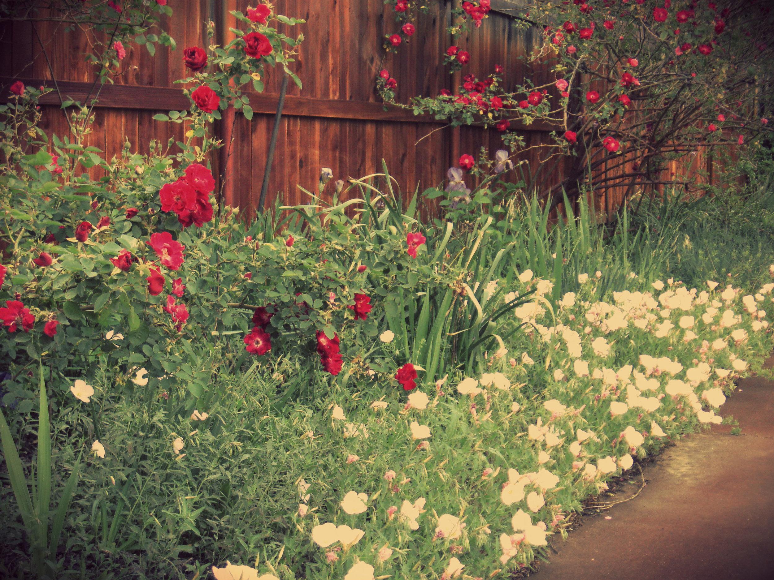 garden websitea.jpg