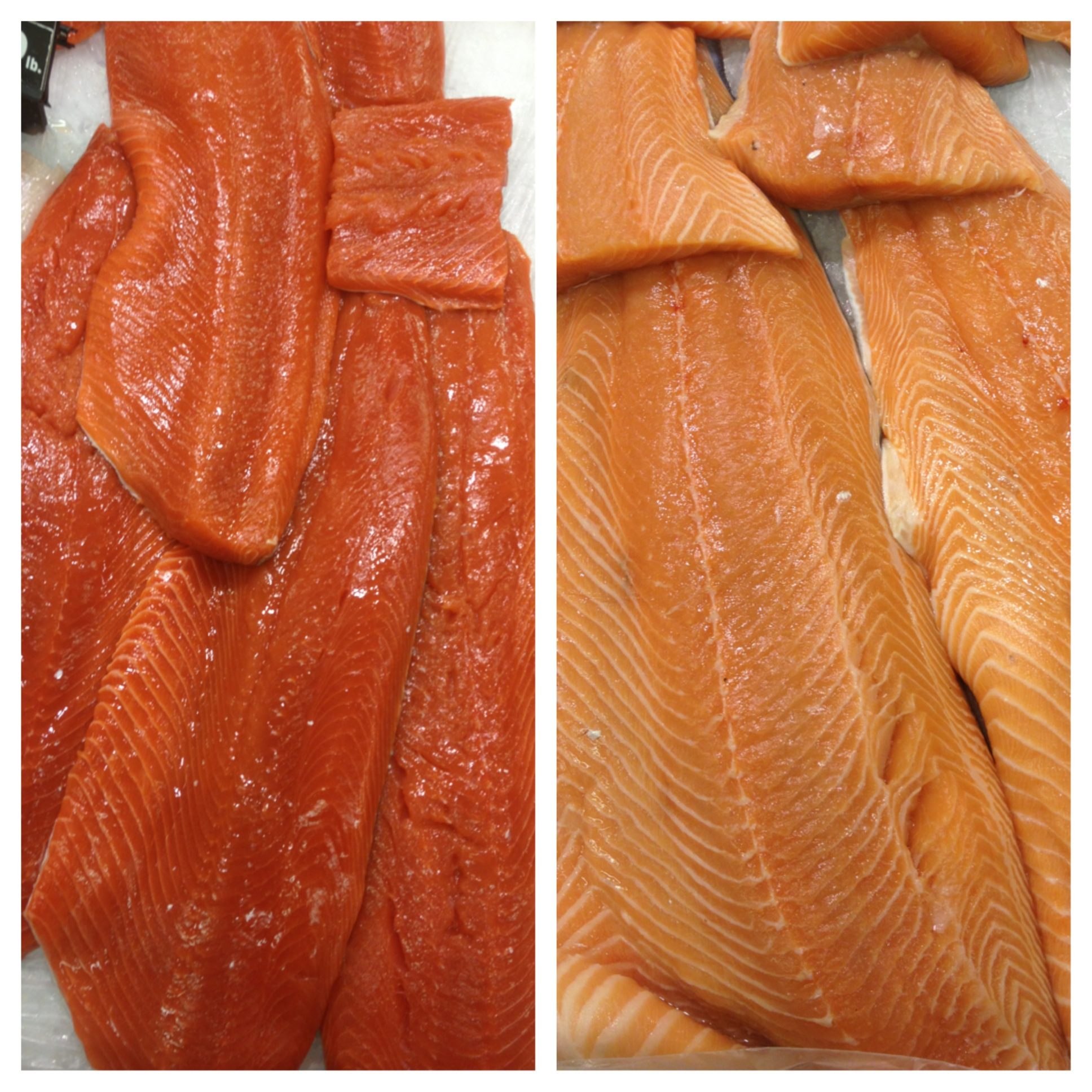 Wild vs. Farm Raised Salmon