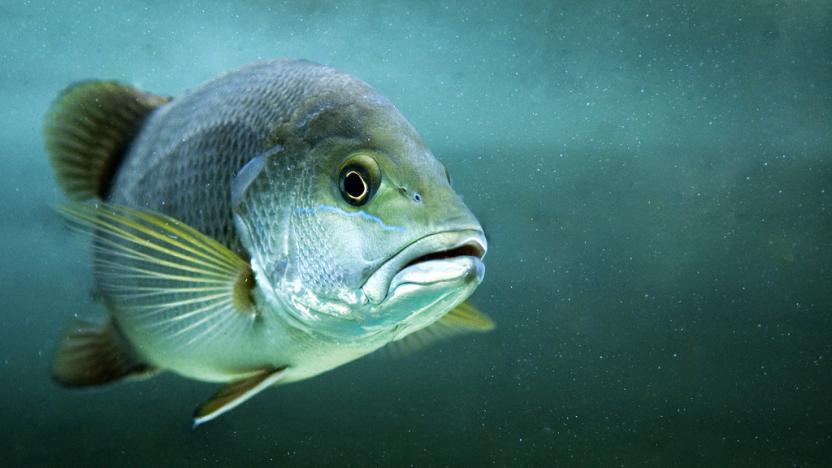 fische_fishface_ueberfischung.jpg