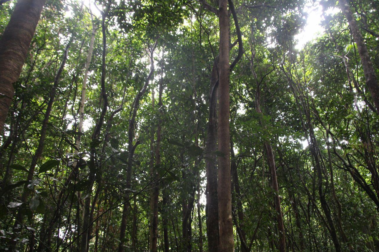 So. Many. Trees.