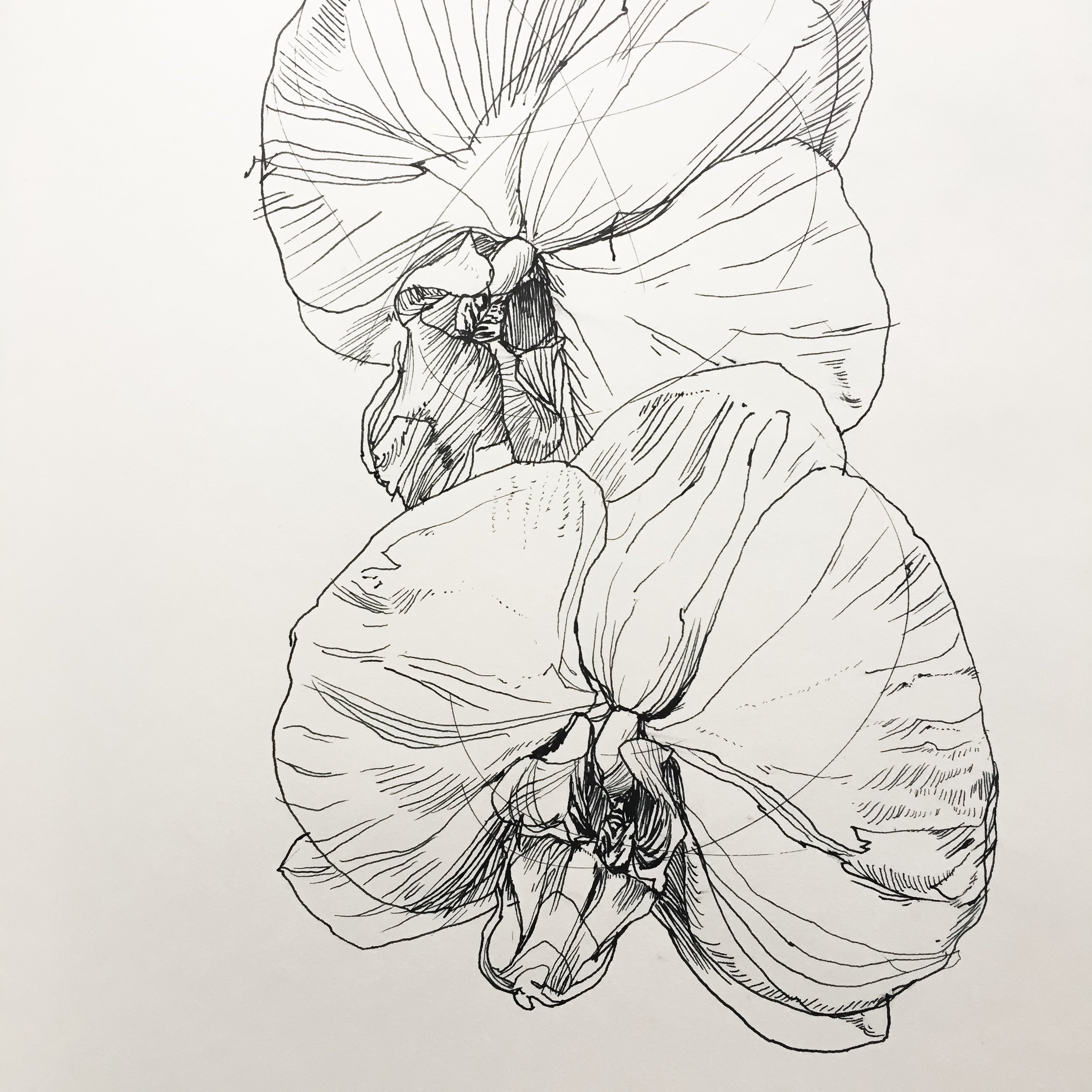 """Orchids, 8.5"""" x 10"""" ink on paper by Melissa Carmon"""