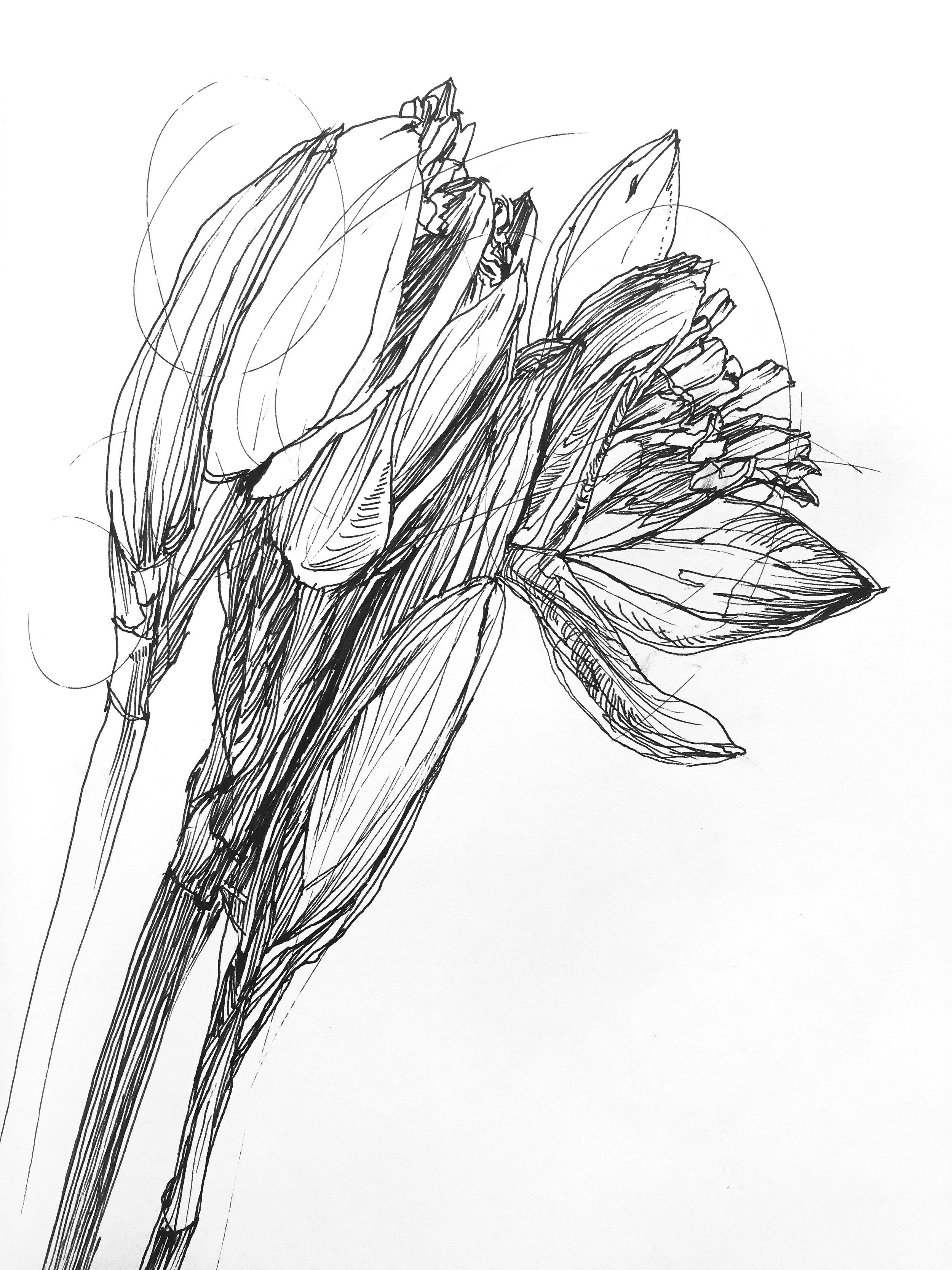 Fresh Daffodils 3
