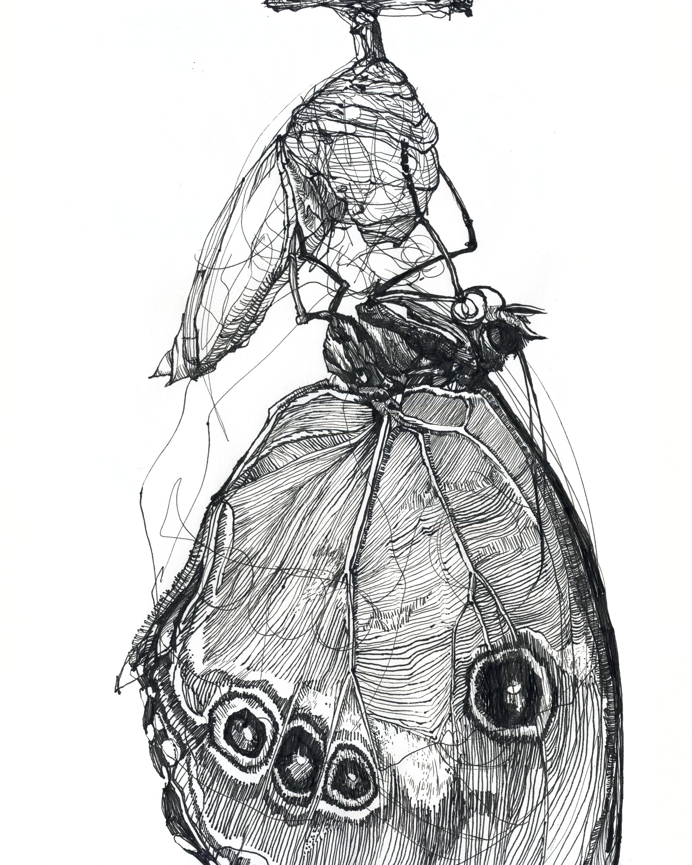 Melissa Carmon Metamorphosis.jpg