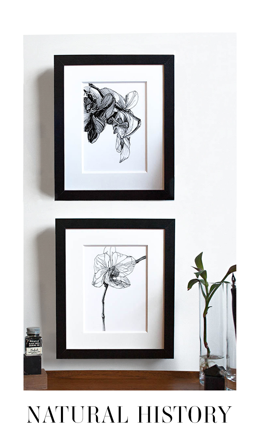 Melissa Carmon Art Drawing Botanical Prints