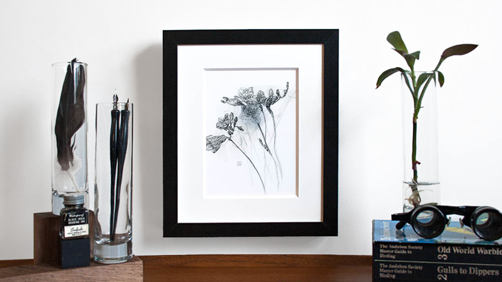 Melissa_Carmon_Art_Freesia_Flower_Art_Botanic_Drawing.png