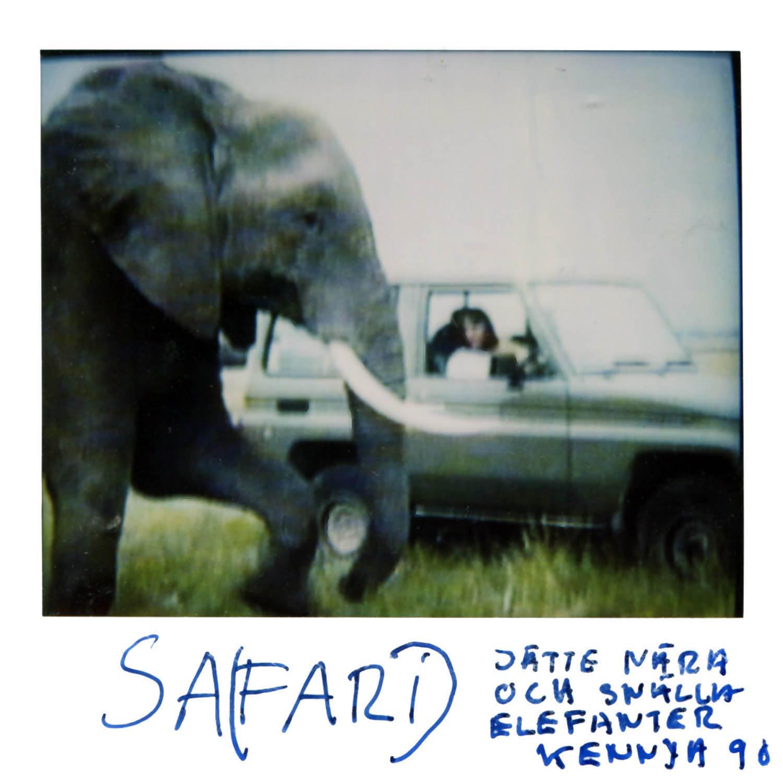 SAFARI   Pretty close and really friendly Elephants Kenya 91