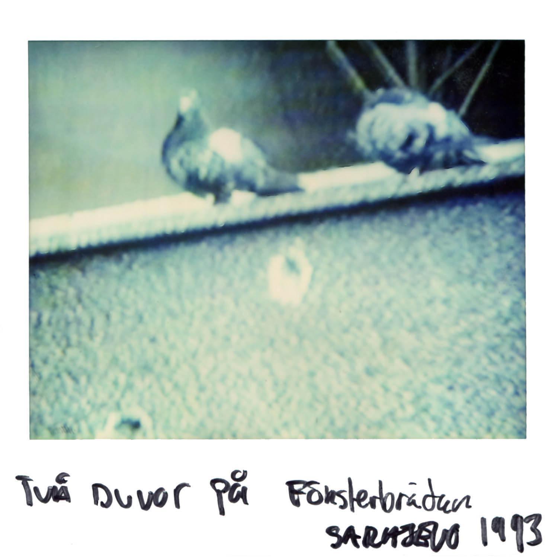 2 doves on the windowsill  Sarajevo 1993