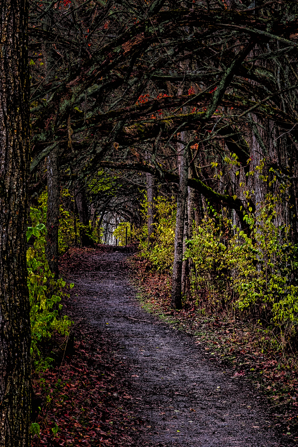 Osage Orange Tunnel, Study No 1 – Bellbrook, Ohio – 2012