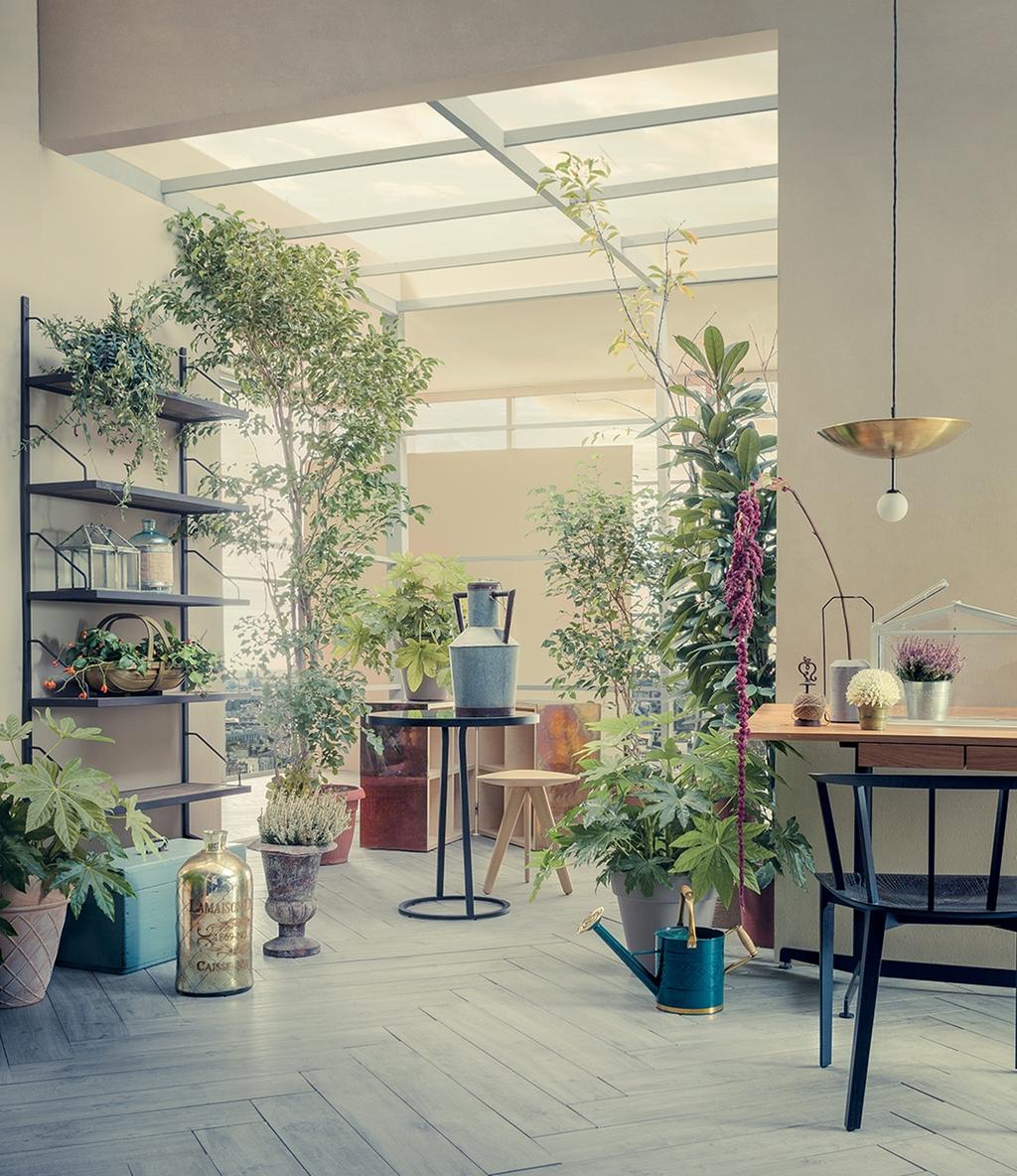 Up down     pendant light   | 117OL-P01 Studio Tenshi - 3 house plants Atmospheric room