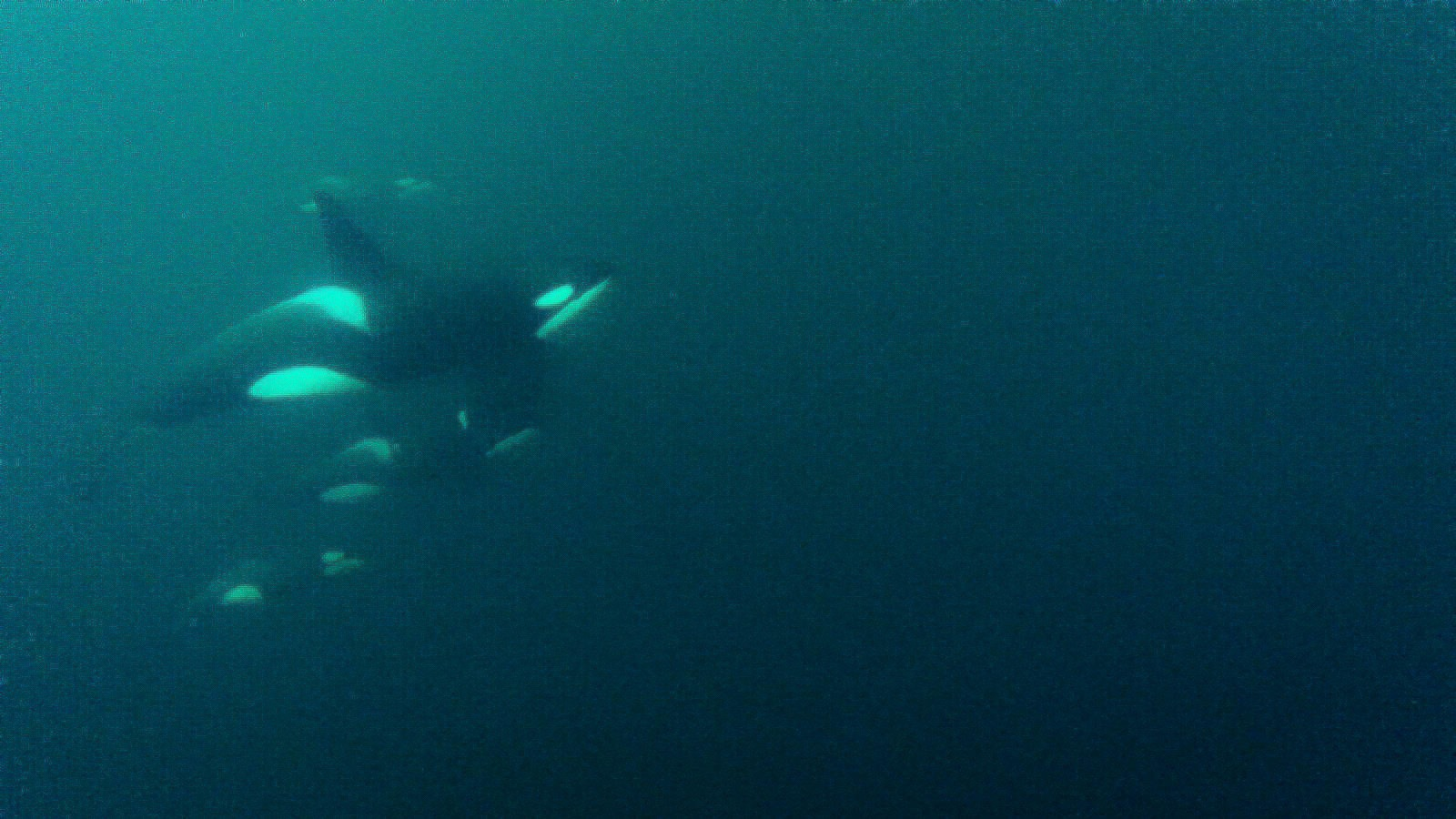 orca from film-24.jpg