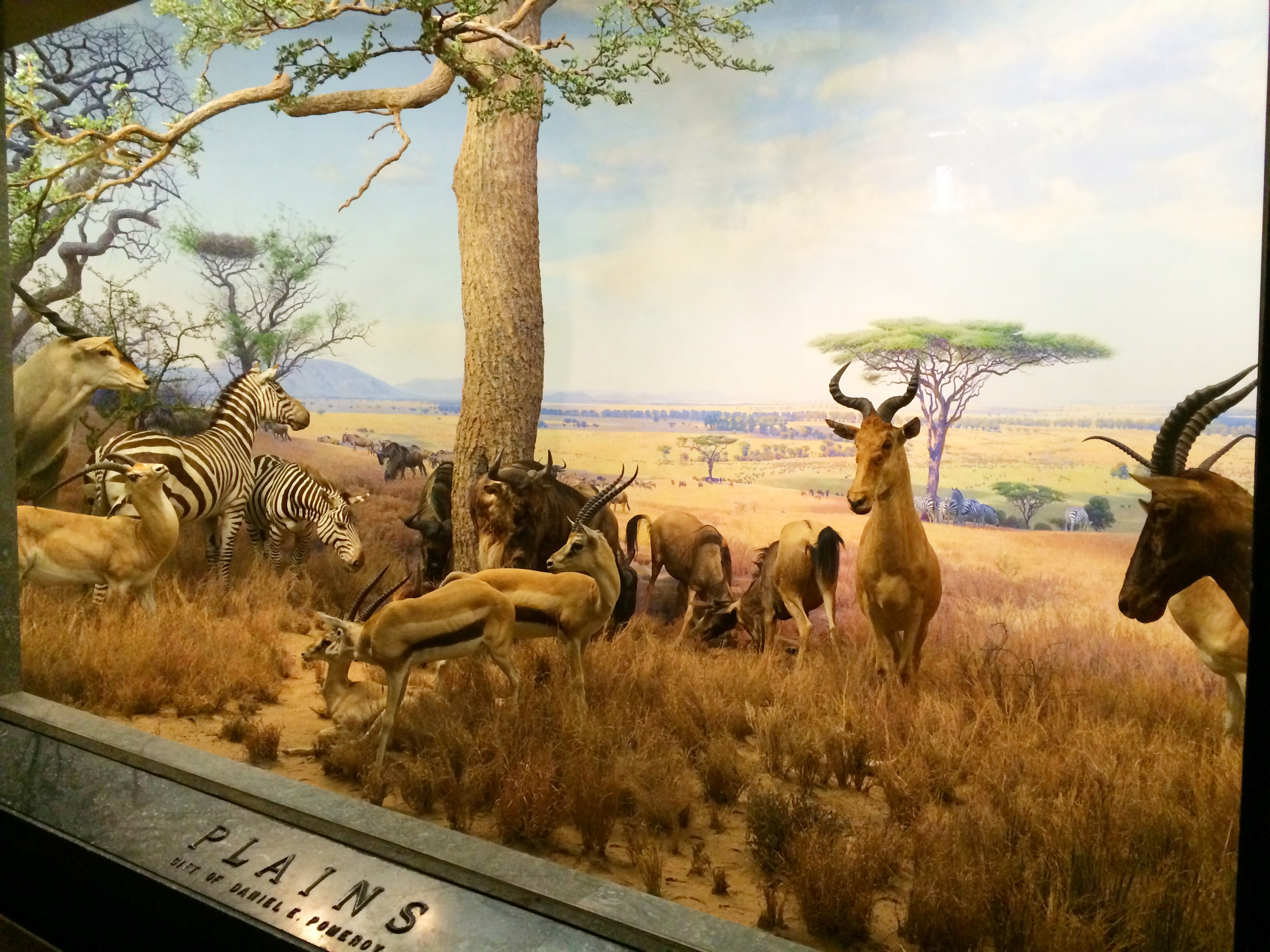 Plains of Africa. Diorama in the AMNH, New York
