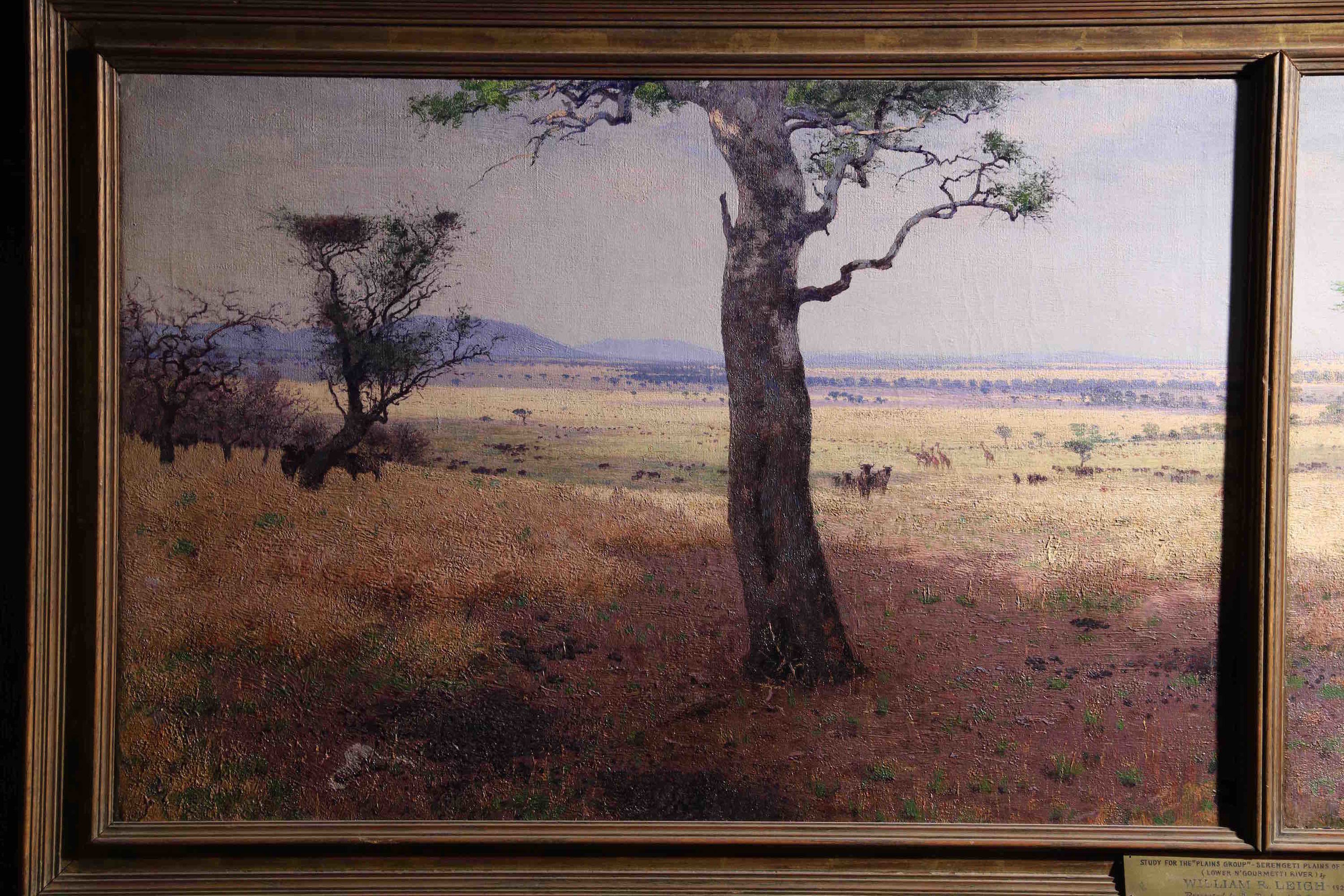 On site sketch of Serengeti plains, William Leigh