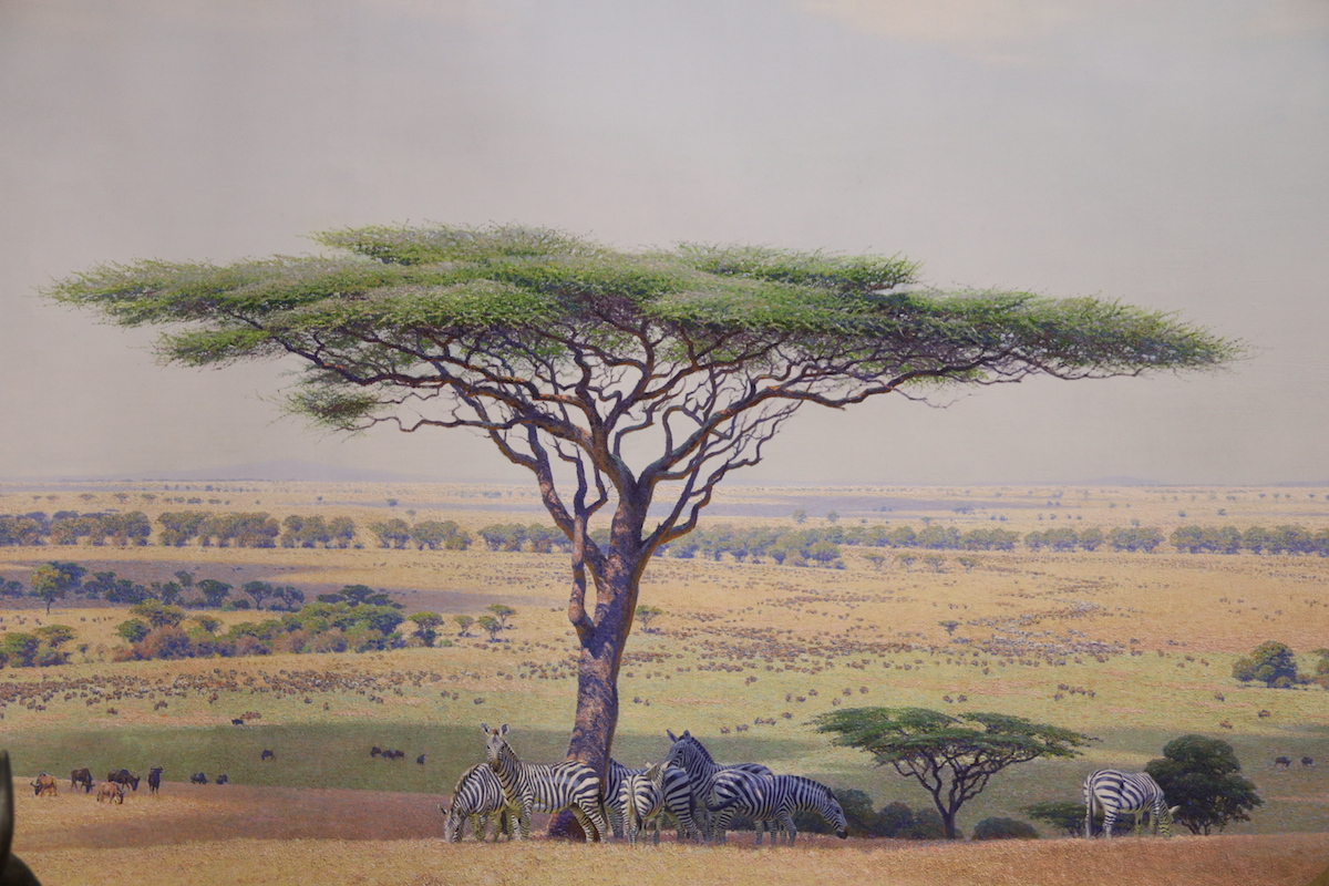 plains group, serengeti 05.JPG