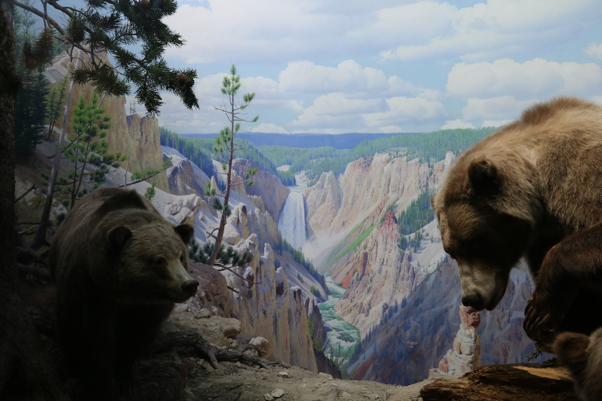 Resulting diorama in AMNH.