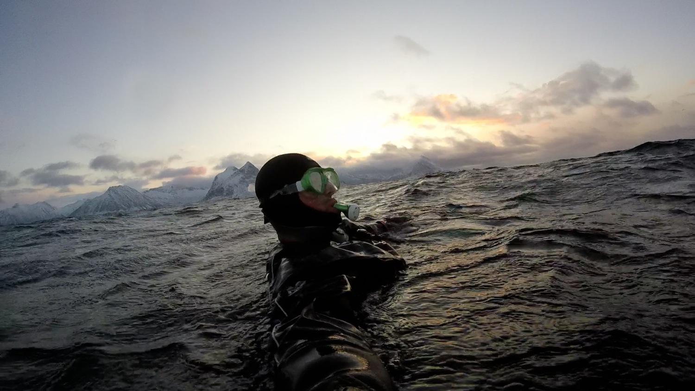 orca snorkling.jpeg