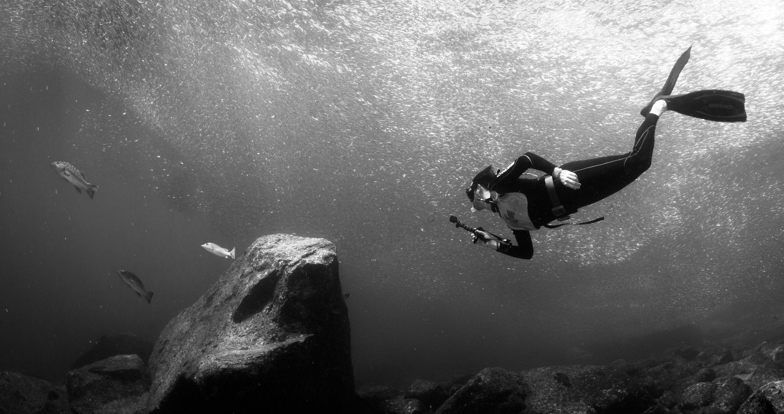 Free diving under the Sardines of Los Isolotes. (photo by  Alex Rose )