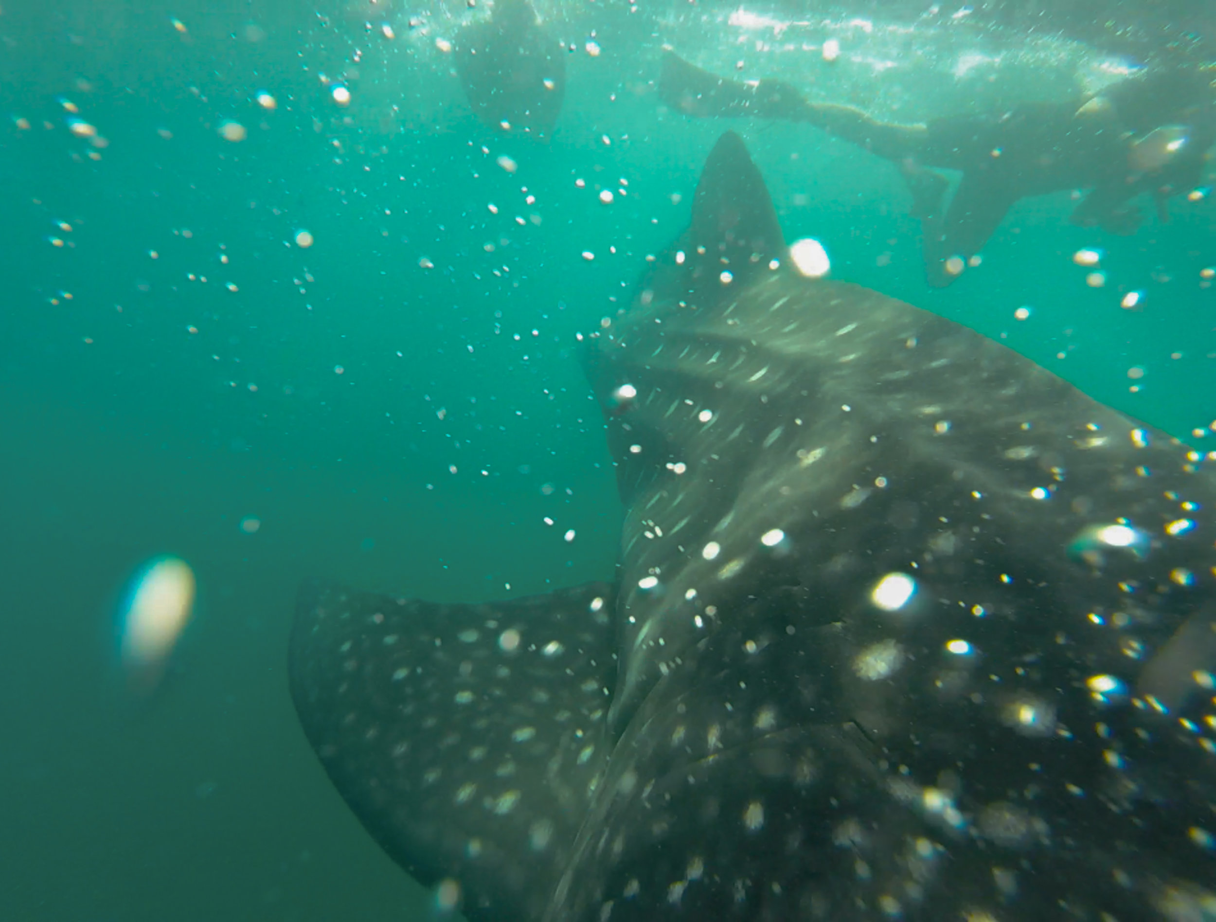 My view as a 6m shark barges through.