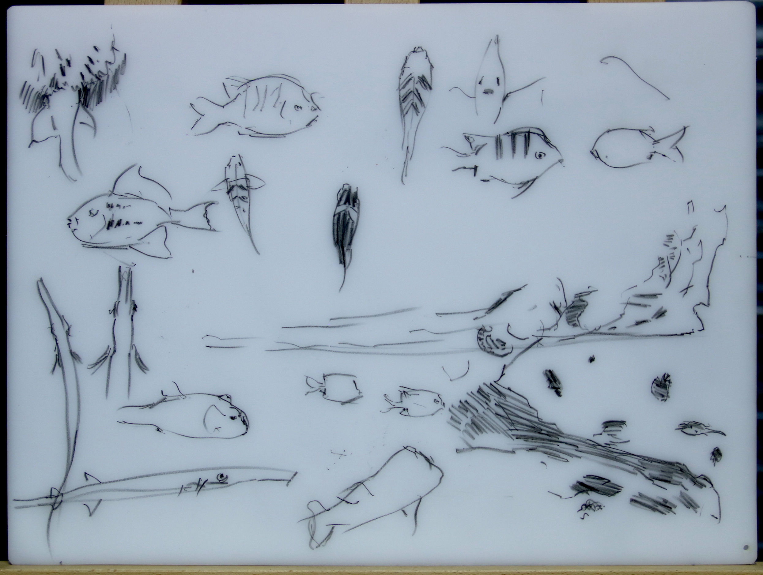 Various reef dwelling fish: Sargent majors, parrot fish, puffer fish, needle fish.