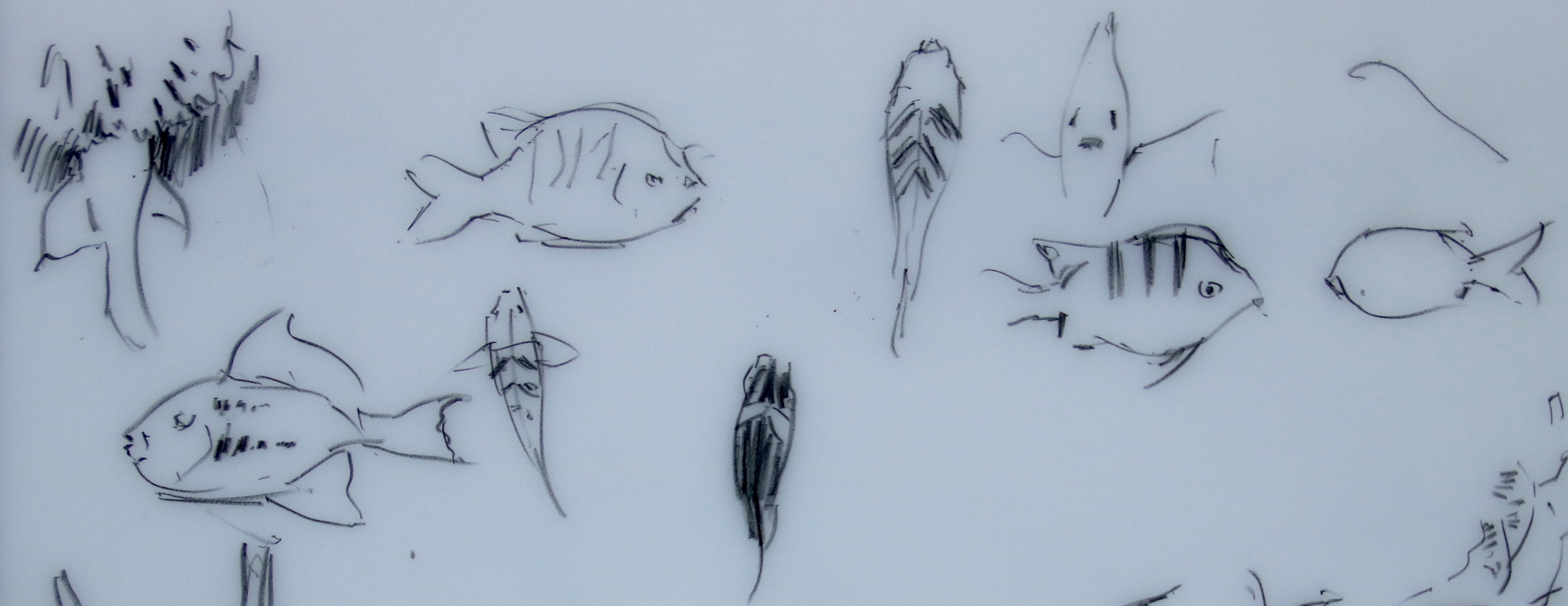 Fish sketched at Swanee reef, sea of Cortez.