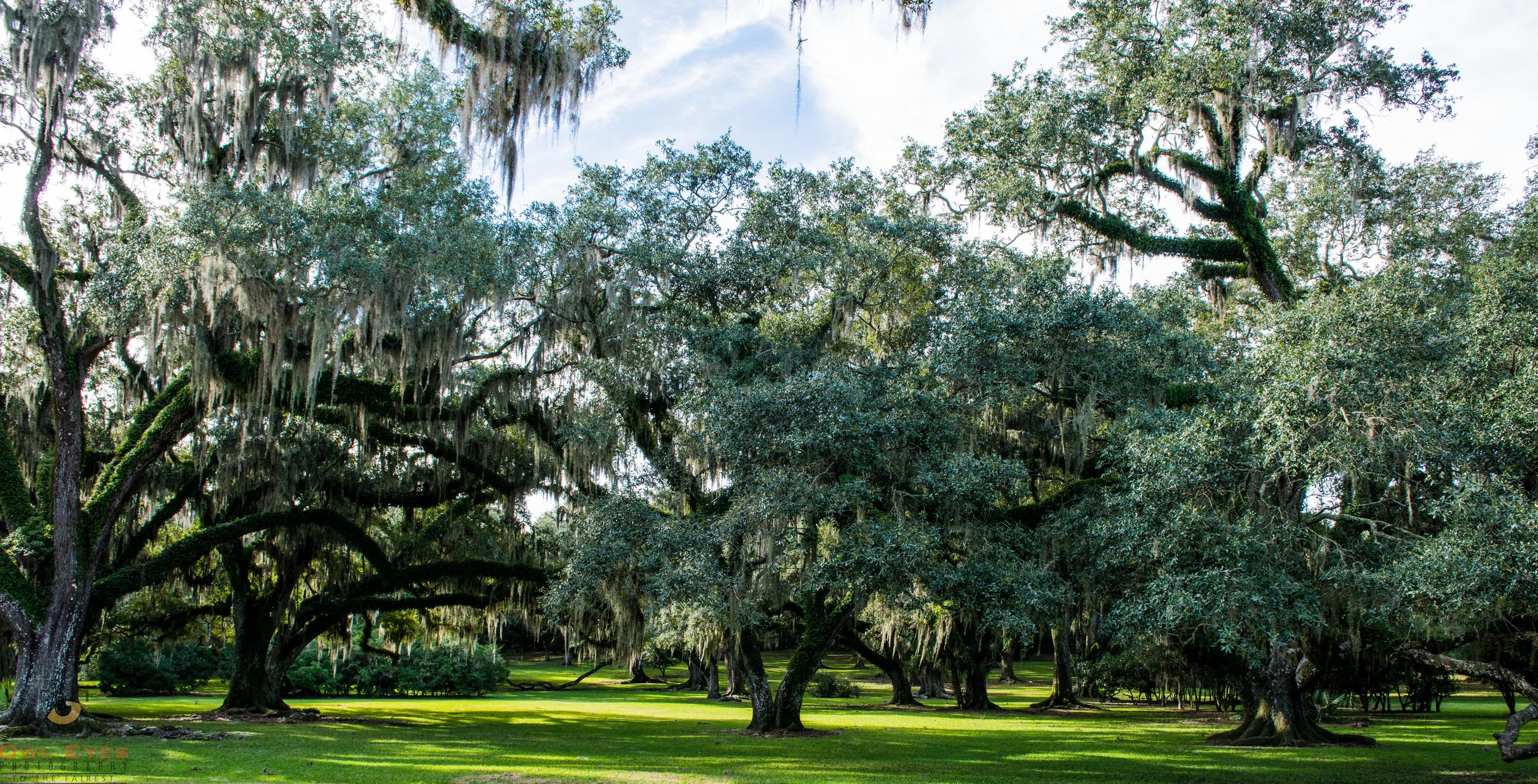 Avery Island Louisiana