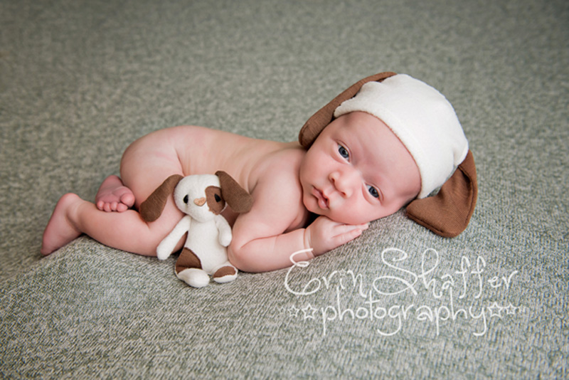 Newborn posed with small puppy and puppy hat still awake - harrisburg newborn photographer
