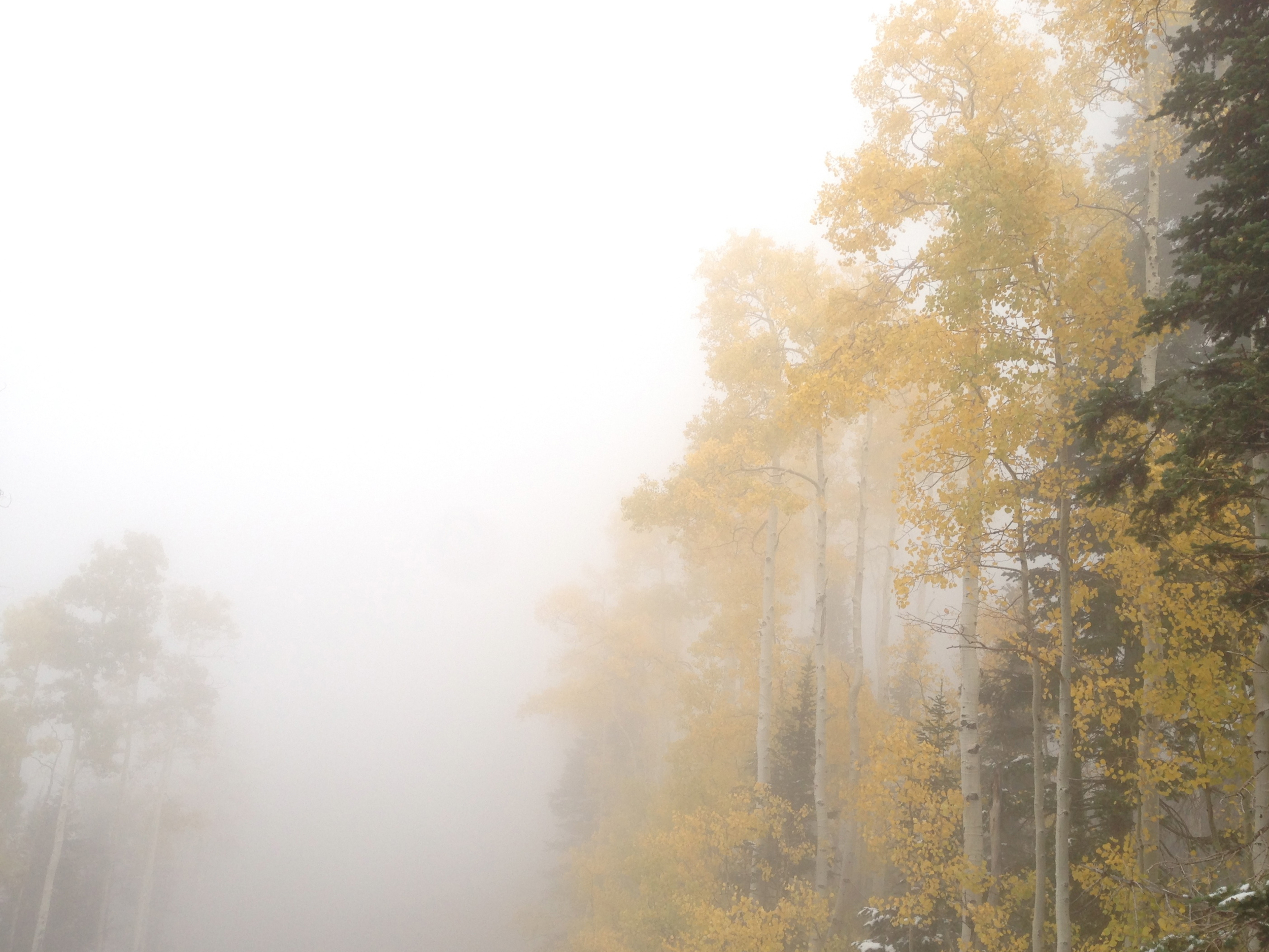 fog trees straight.jpg