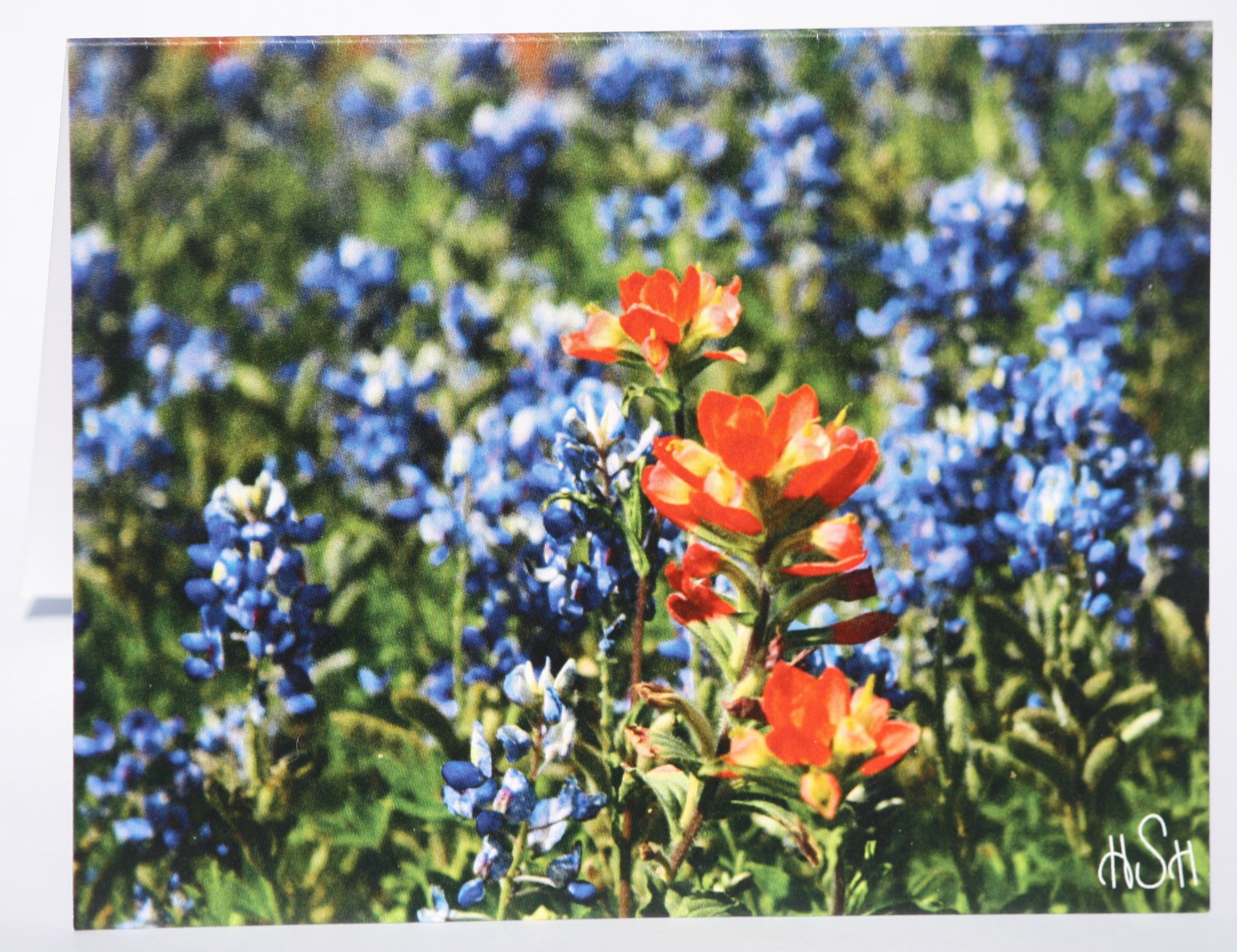 "One of our new stationery cards featuring an ""Indian Paintbrush"" in a sea of ""Bluebonnets."""