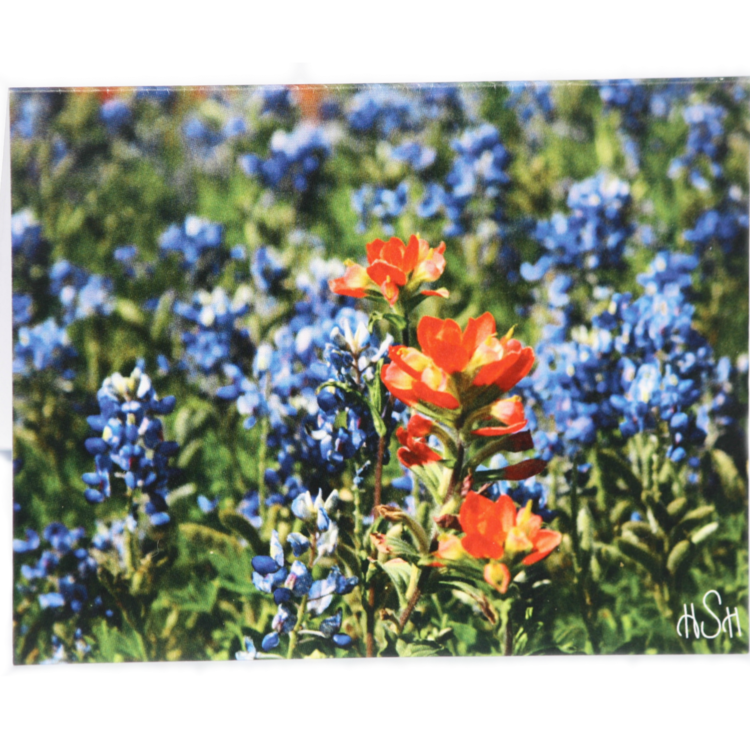 Photography Stationery  Nature at the 2S Ranch is captured through Holly Simmons' camera lens and printed on stationery cards. Each pack includes eight horizontal 4x6 cards along with eight envelopes in a bandana pouch.