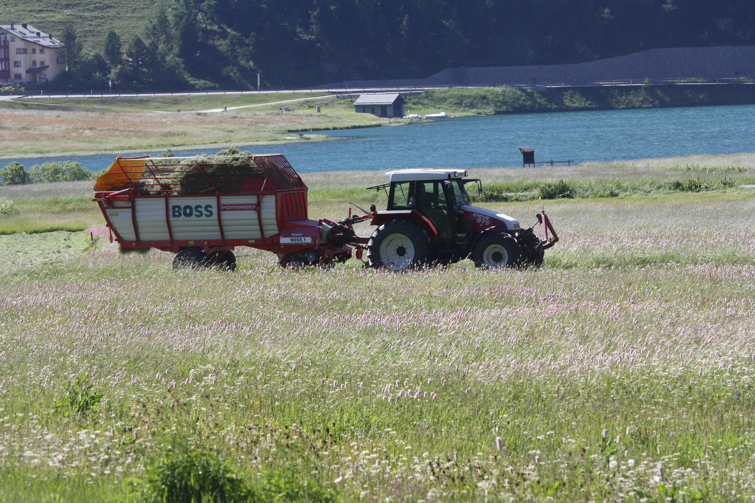 They are already cutting their grass. The grass is so lush that I'm guessing they can get a fewcuts in before winter.
