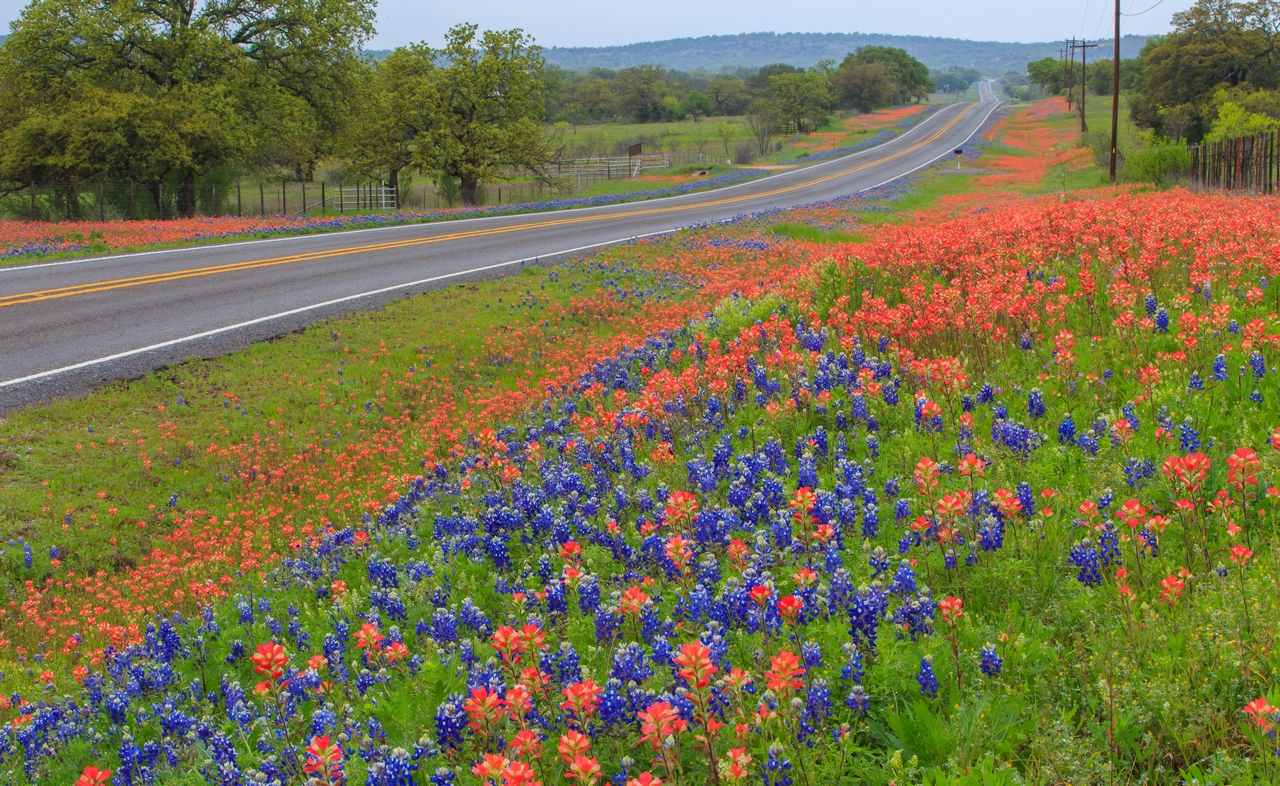 2016 spring Bluebonnets and Indian paintbrush found 10 miles nor.JPG