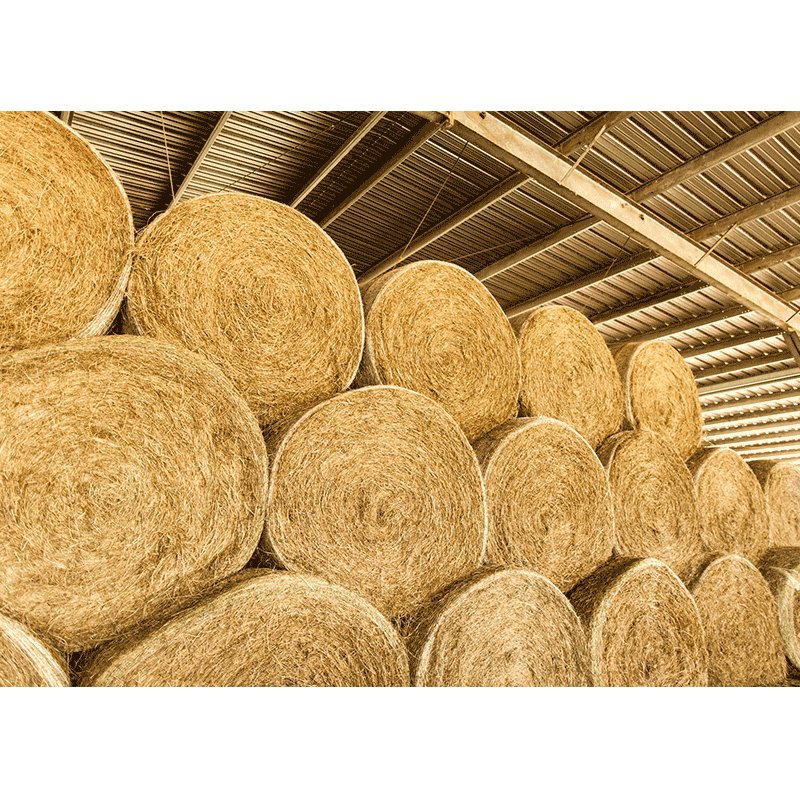 hay-bales-for-sale-round-dry-scc.png