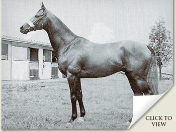 Sentinel Racehorse