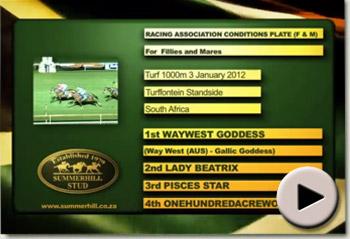 Waywest Goddess wins Racing Association Conditions Plate