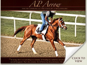 ap arrow racehorse