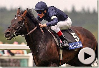 Champion Racehorse Yeats