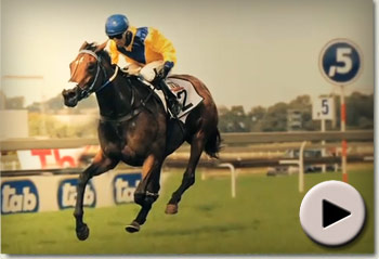 Racehorse Igugu sold by Summerhill Stud