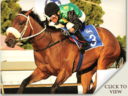 Hollywoodboulevard daughter of Street Cry
