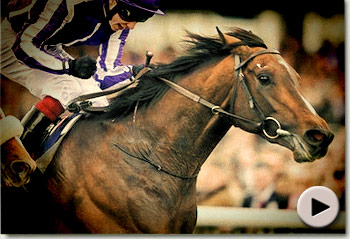Camelot Ste Leger Stakes Promo