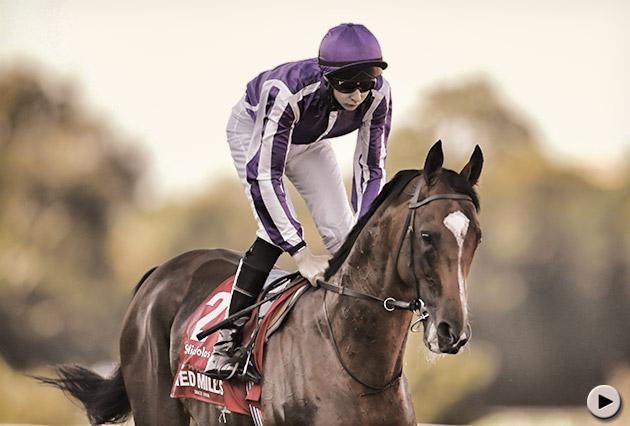 St Nicholas Abbey Horse