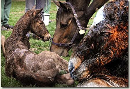Newborn Foals